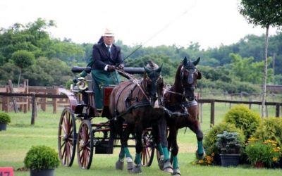 Reportaj / Pasiune pentru cai la Ferma Jack: incursiune în lumea ecvestră a lui Paul Pop