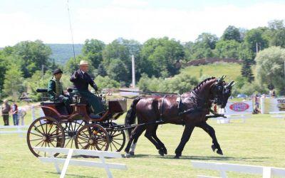 Reportaj / Horseland: drumul lui Paul Pop și al cailor săi spre Campionatele Mondiale din Lipica (Slovenia)