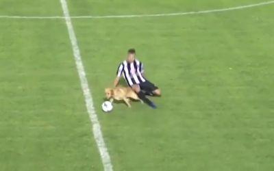 VIDEO / Un câine intră prin alunecare și recuperează o minge în Argentina