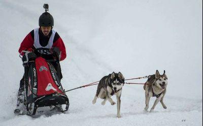 Exclusiv / Incursiune în lumea curselor de atelaje canine cu Bogdan Berende, campion european la sled dog