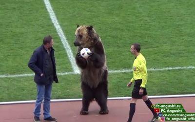 VIDEO inedit / Un urs a oferit mingea arbitrului la un meci din Rusia