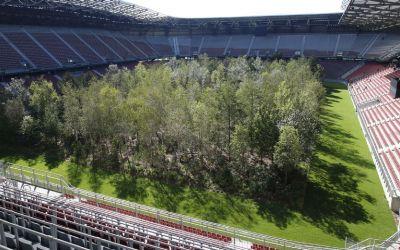 VIDEO inedit / Un stadion care a găzduit meciuri la Euro 2008 a fost transformat într-o pădure