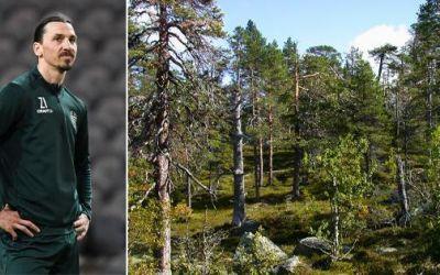Zlatan Ibrahimovic și-a cumpărat milioane de metri pătrați de pădure